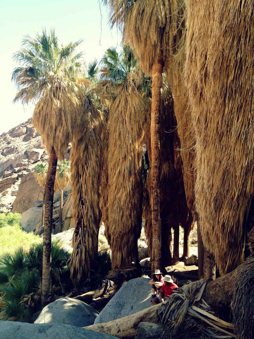 Anza-borrego-palms-880web