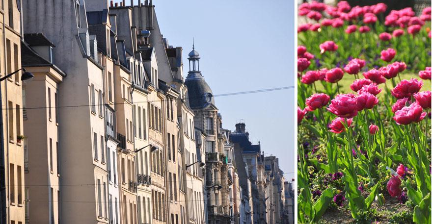 Paris-tulips-880web