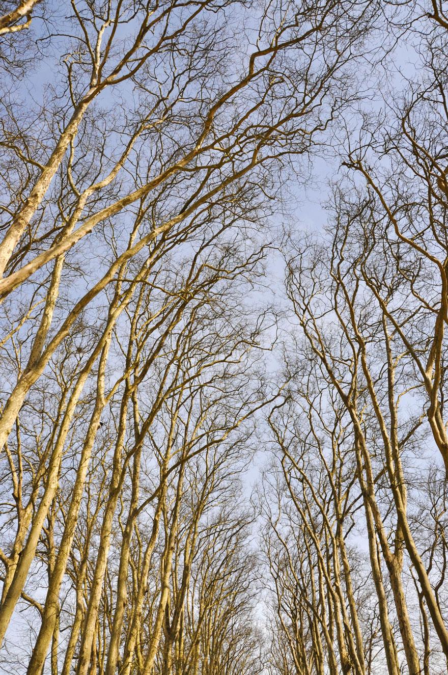 ParisLR-335-880 versailles garden forest