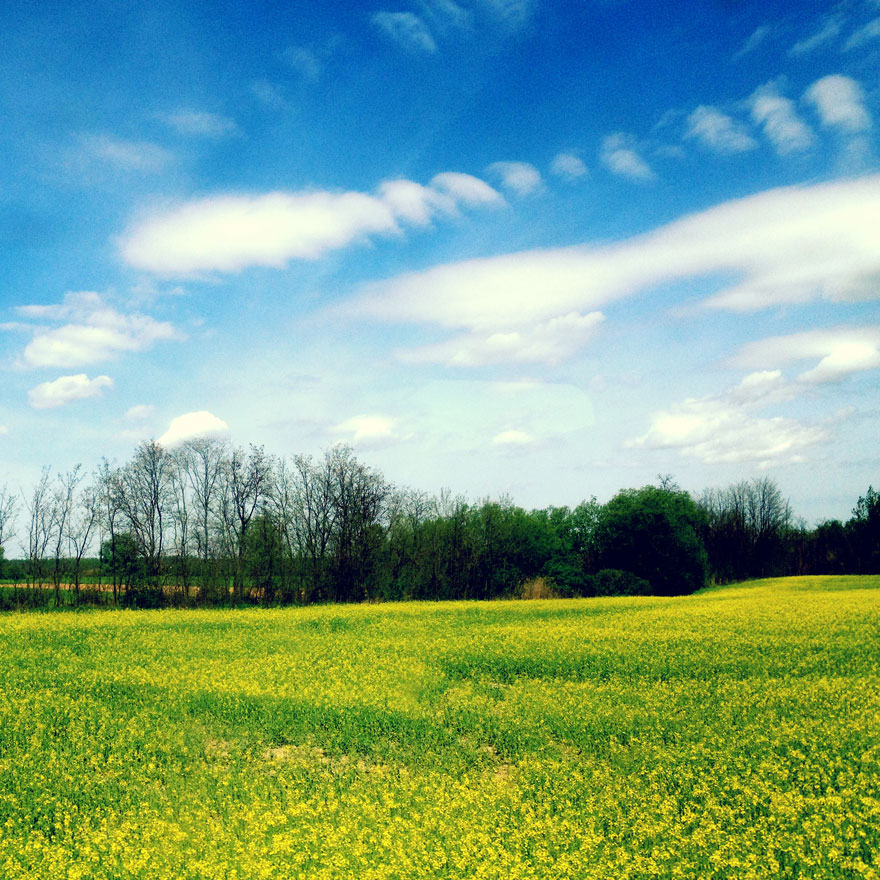 BPtrainview-yellowfield-880web