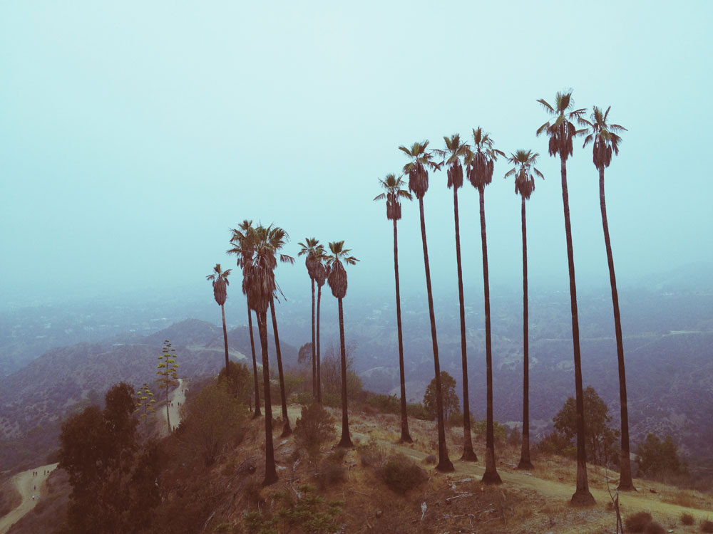 hiking palm trees