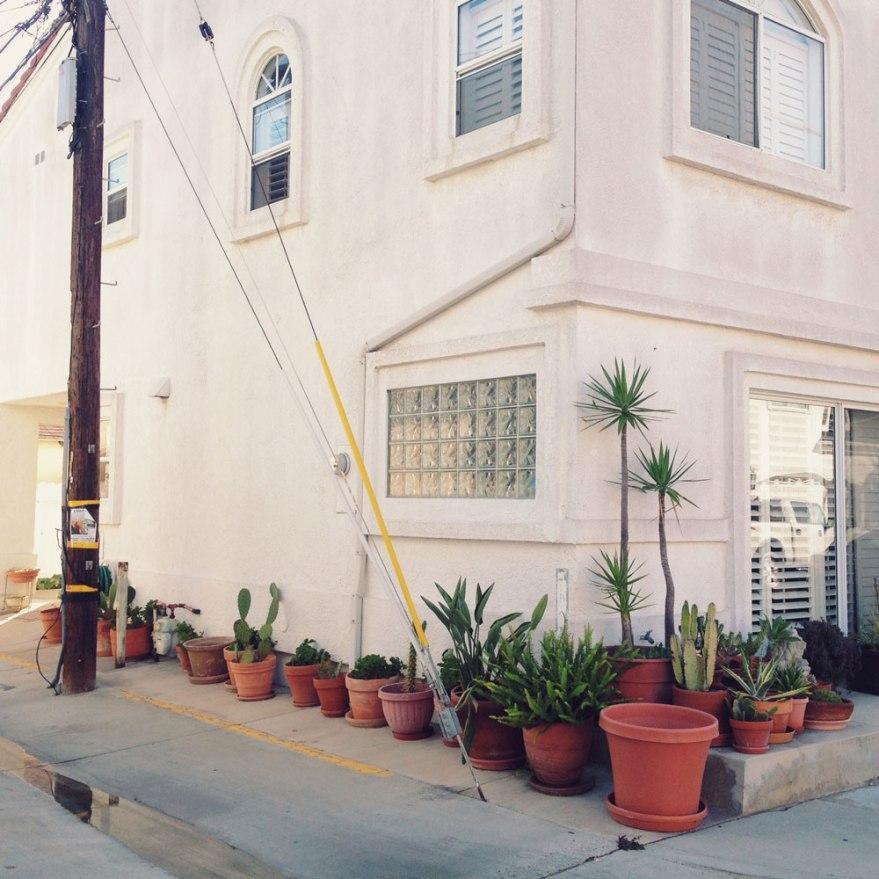 succulents potted plants