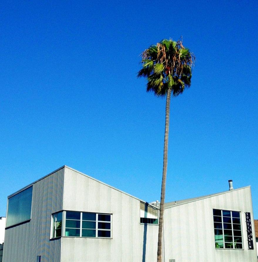 newport-beach-palmhouse-wb