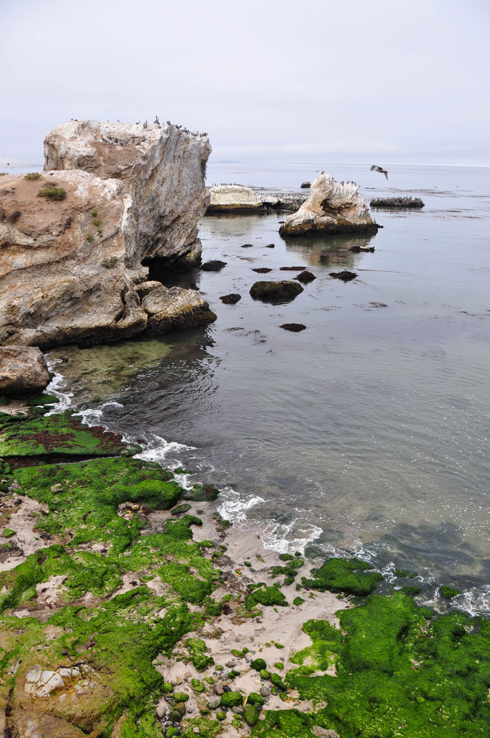 pismo beach rocky ocean