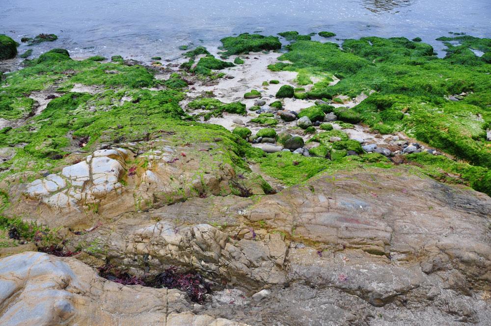 pismo beach moss