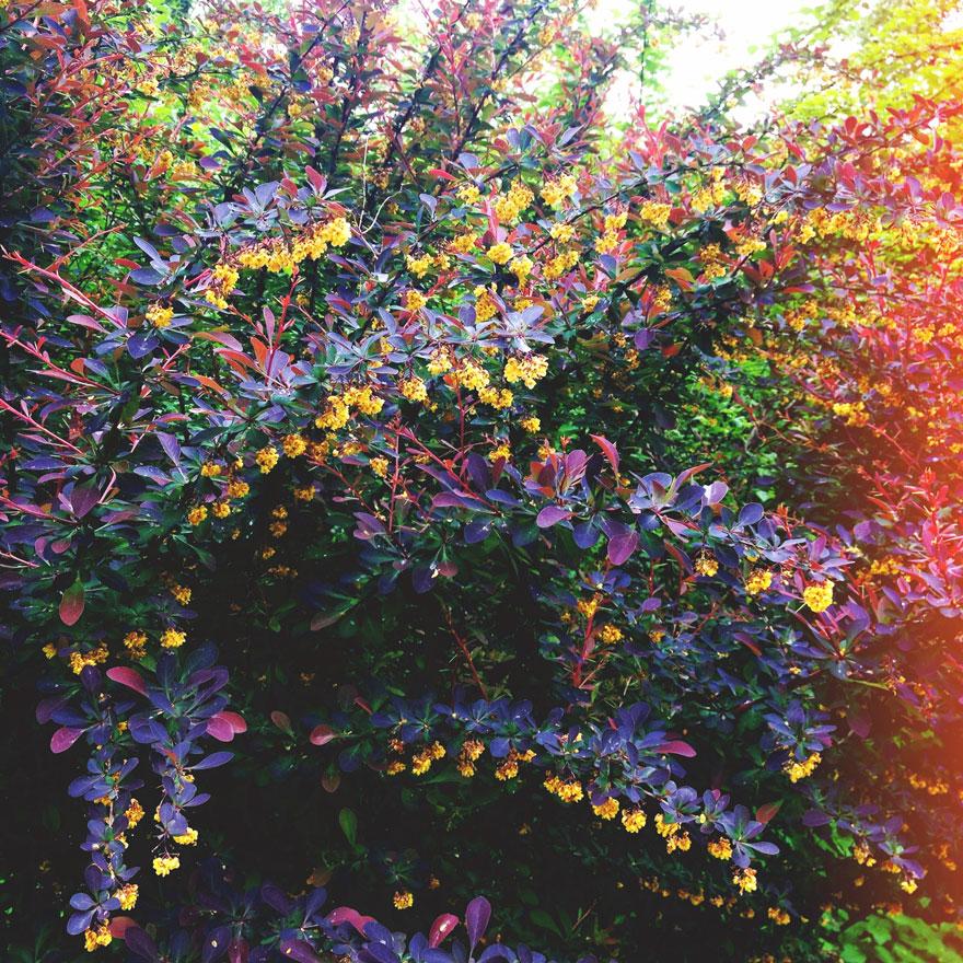Schonbrunn-garden-880web