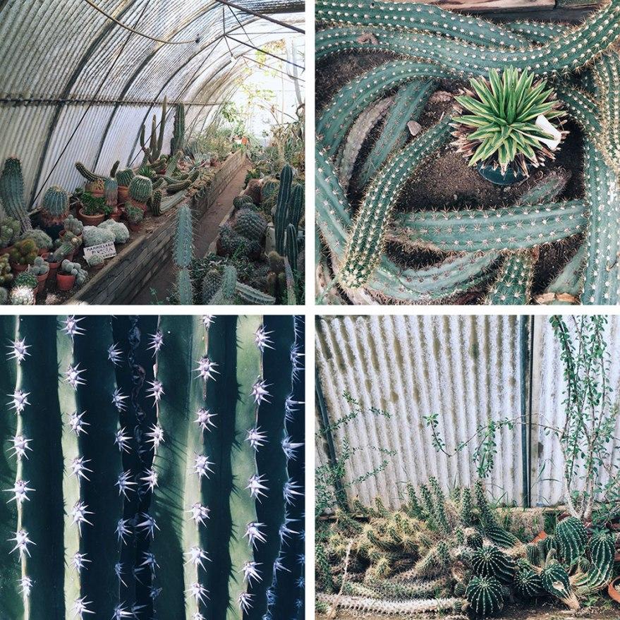 cactarium-quad-wide-web