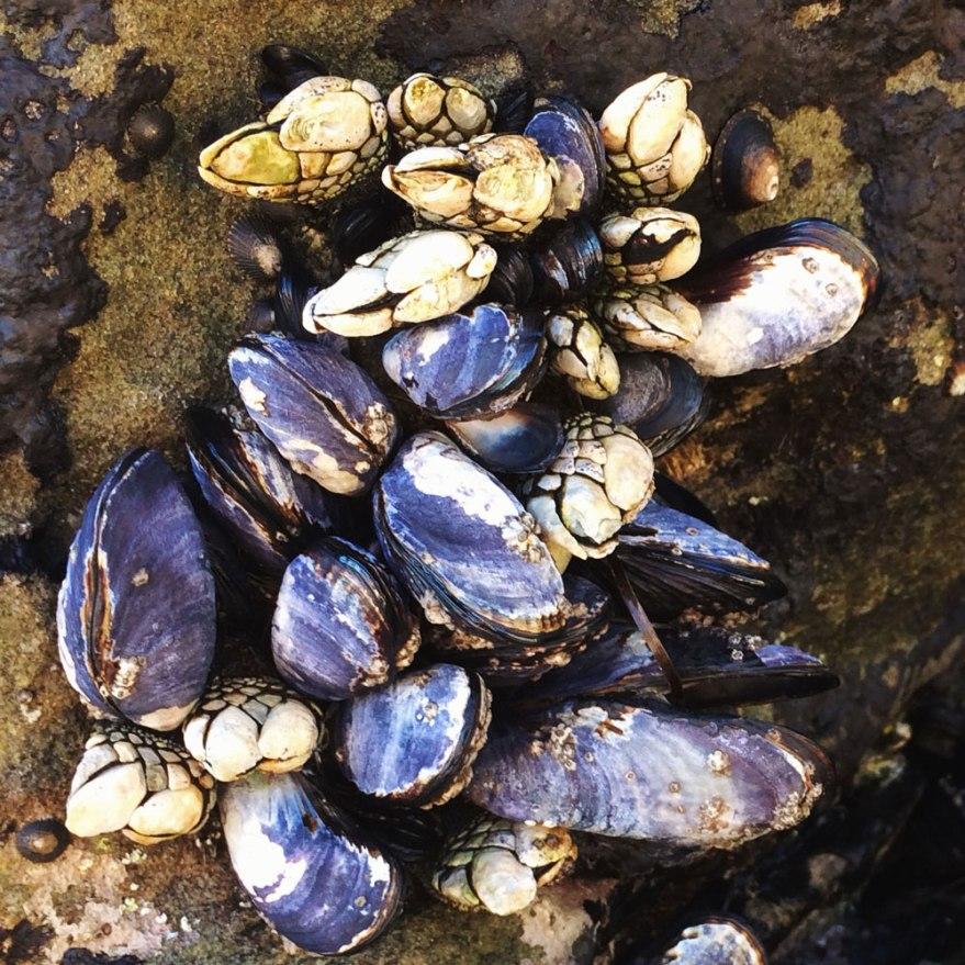Laguna-seashells-web