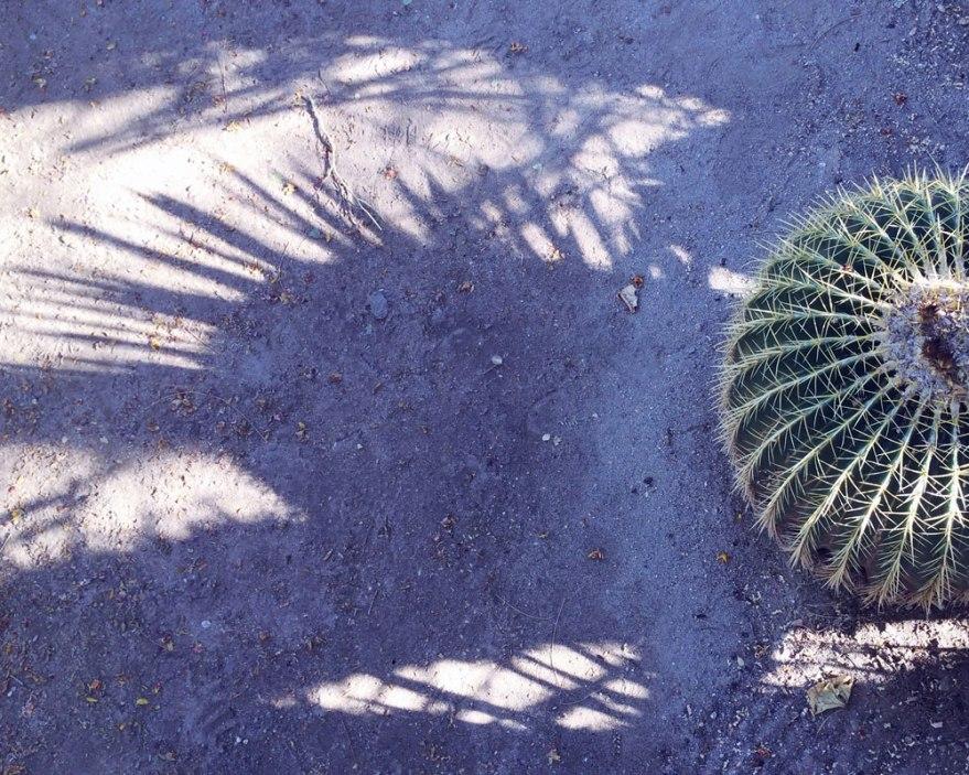 palmsprings-cactus-shadow-web
