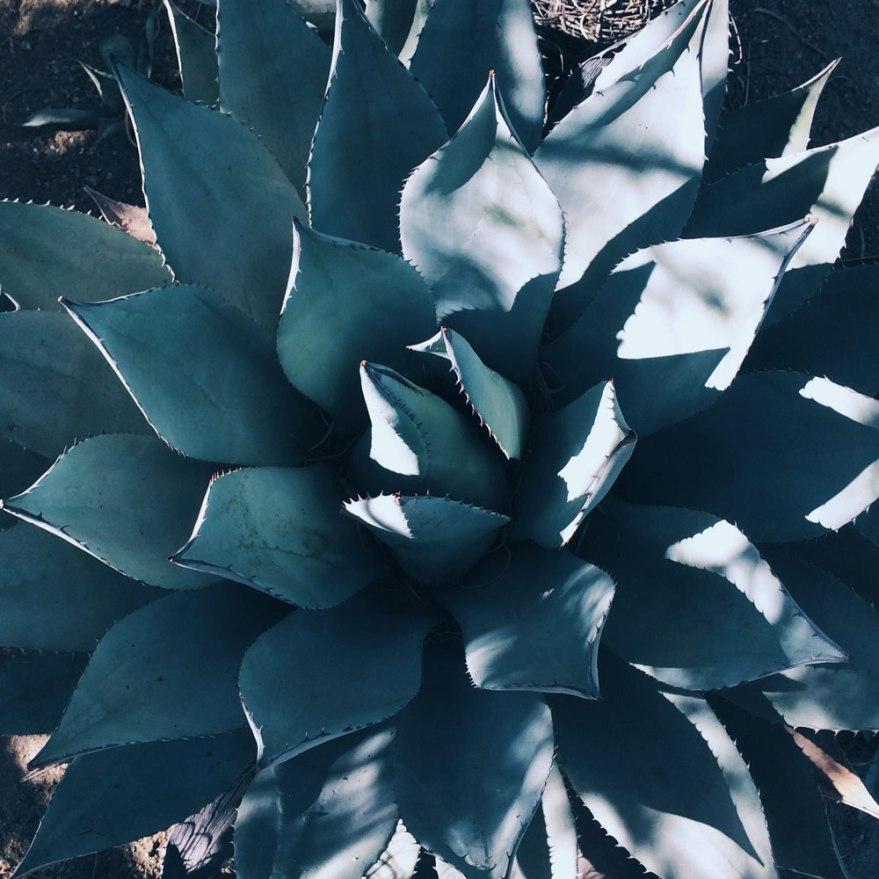 palmsprings-succulent-web