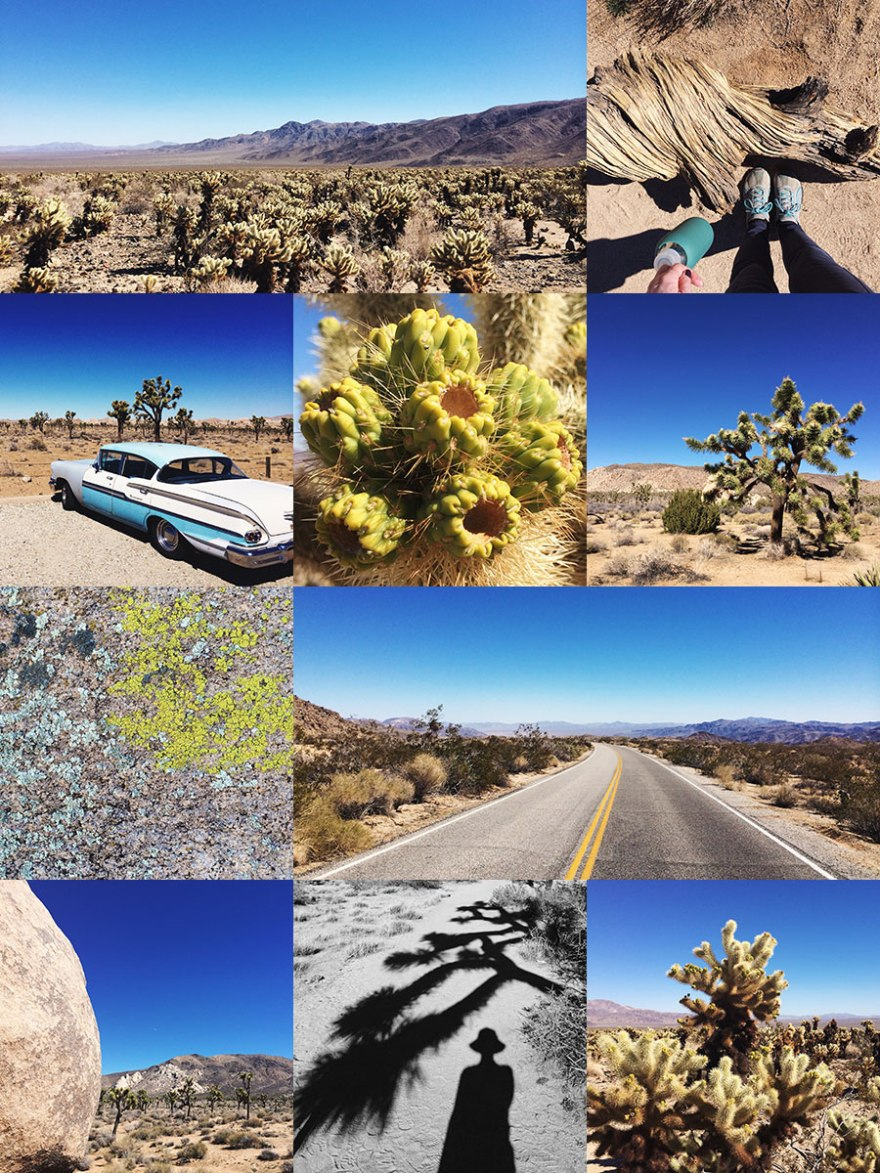 joshua-tree-collage-mood-WEB