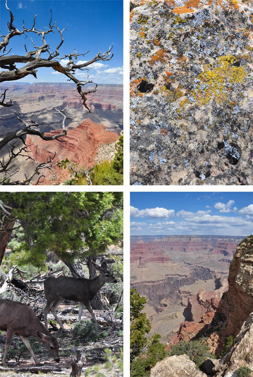 grand-canyon-2x2-rectangles-880web Grand Canyon National Park Arizona